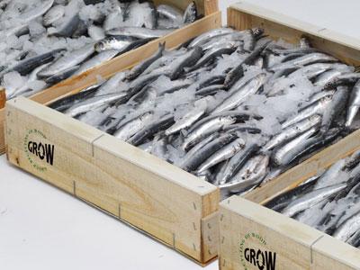 Cajas de pescado